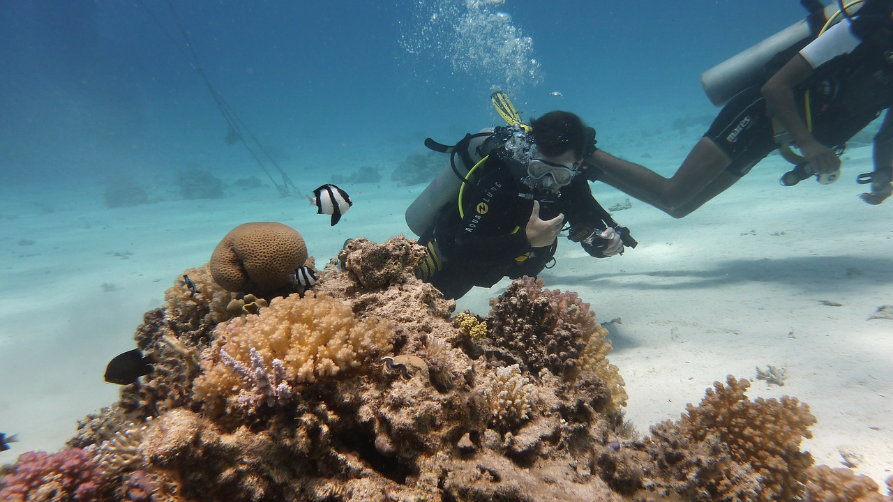 an overview of the fun sport of diving and underwater exploration Man underwater dates all the way back to the iliad, but sports diving for fun and for a profession is fairly new scuba diving: the dangers and rewardsscuba diving is a sport in which you can lose yourself in the surrounding beauty of the underwater world and even escape gravity for a short time.